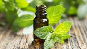remedios caseros para piojos y liendres