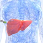 fibrosis-hepatica
