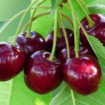 Beneficios para la salud de las cerezas oscuras