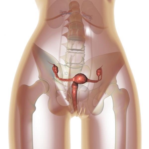 Cuál es el tamaño normal del útero