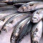 Cuáles son los beneficios del pescado graso para la salud humana
