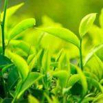 Cuánta cafeína en el té verde