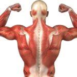 ¿Cuántos órganos hay en el cuerpo humano?