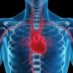 Dónde está el corazón ubicado en el cuerpo humano