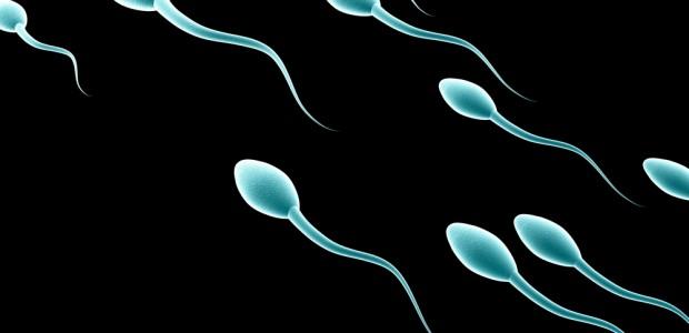 El esperma en el contenedor de laboratorio