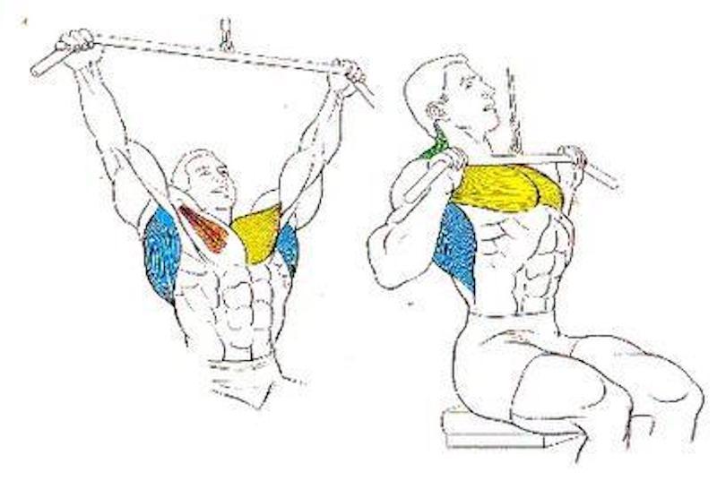Explicación del ejercicio de espalda y pecho