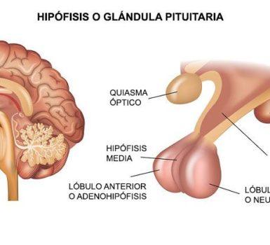 La prueba de sangre de la hormona folículo estimulante (FSH) mide el nivel de FSH en la sangre. La FSH es una hormona liberada por la glándula pituitaria, ubicada en la parte inferior del cerebro.