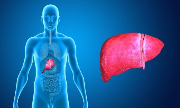 Vivir sin páncreas estilo de vida y efectos secundarios