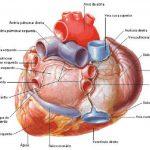 drenaje-venoso-pulmonar-anomalo-total