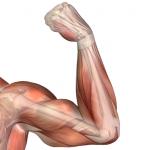 Enfermedades del Sistema Muscular
