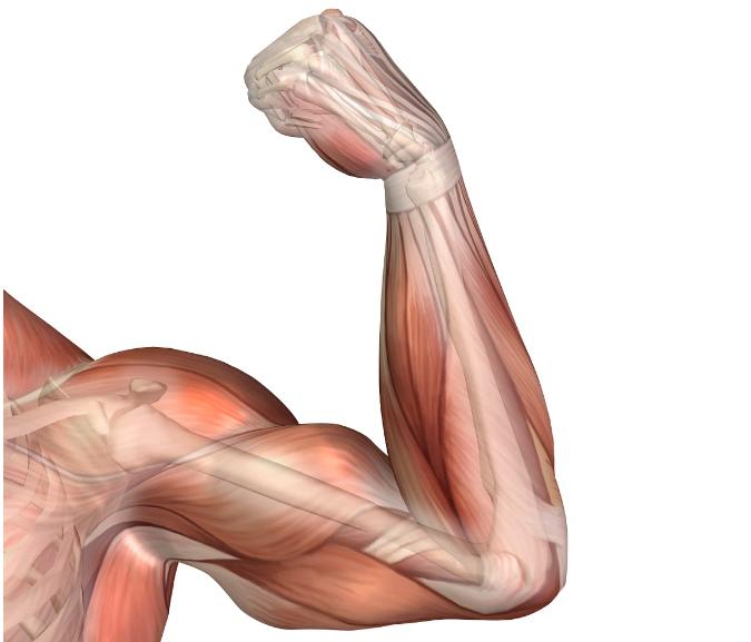 enfermedades-del-sistema-muscular