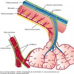 Función de vena pulmonar
