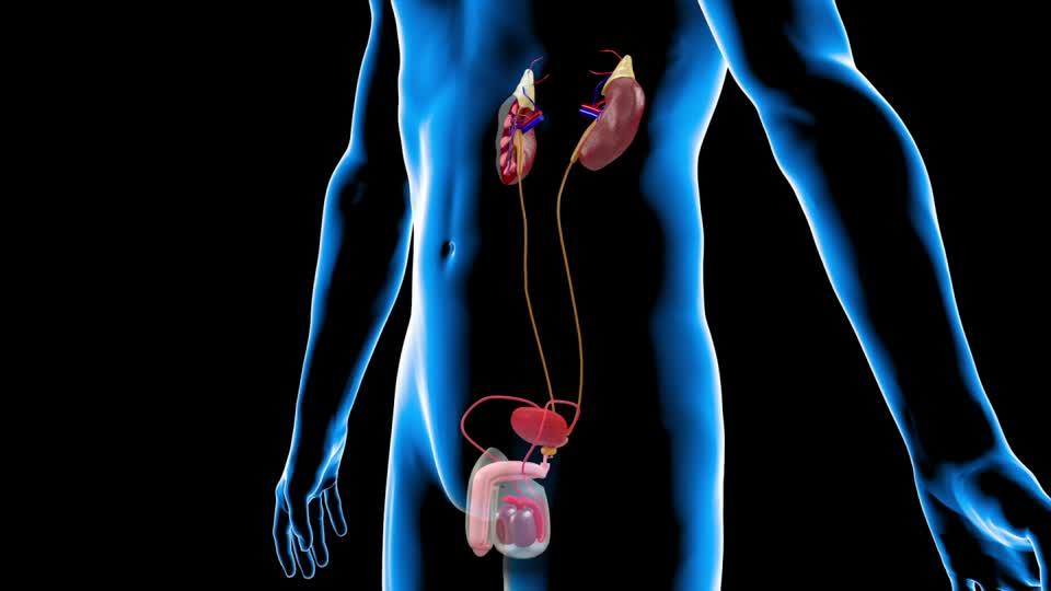 Qué es la diálisis renal y cómo funciona