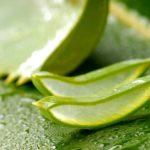 Principales beneficios de beber jugo de hojas de aloe vera