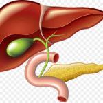 pruebas-de-funcion-hepatica