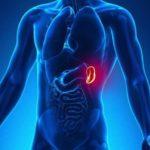 Función del bazo en el cuerpo humano