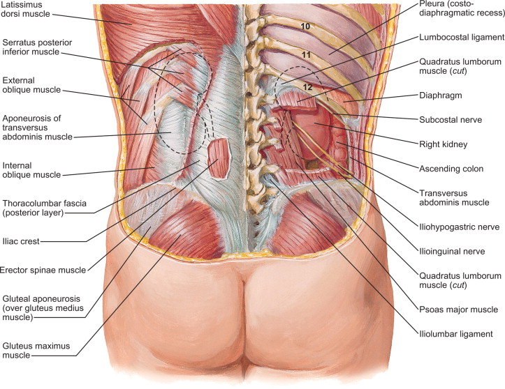 distension-del-musculo-intercostal