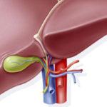 Función de la vesícula biliar en el cuerpo humano