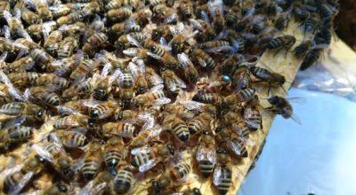 por-que-ocurren-las-colmenas-como-tratarlos-y-prevenirlos