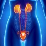 infección del tracto urinario-uti-machos