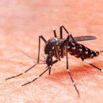 7-formas-sencillas-de-protegerse-chikungunya
