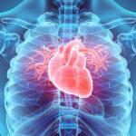 efectos-salud-pulmonar-corazon
