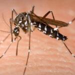 sintomas-de-la-malaria-factores-de-riesgo-y-prevencion