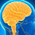 todo-lo-que-necesita-saber-sobre-los-sintomas-y-tratamientos-de-la-epilepsia