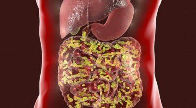 como-mejora-las-bacterias-intestinales