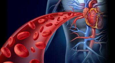 el-estudio-de-la-enfermedad-cardiaca-del-colesterol-no-muestra-ninguna-conexion