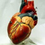 frecuencia-cardiaca-edad-sexo