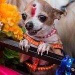 hacer-que-diwali-sea-seguro-mascotas-felices-animales-callejeros