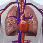 los-latidos-del-corazon-humano-pueden-las-emociones-bombeadas-a-traves-de-la-sangre