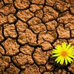 pasos-clave-para-desarrollar-la-resiliencia-depresion-invernal