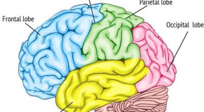 epilepsia-del-lobulo-frontal-causas-sintomas-y-tratamiento