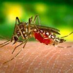 fiebre-del-dengue-causas-sintomas-remedios-caseros-prevencion-y-cura